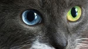 A szem evolúciója