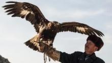 L'ultimo falconiere programma