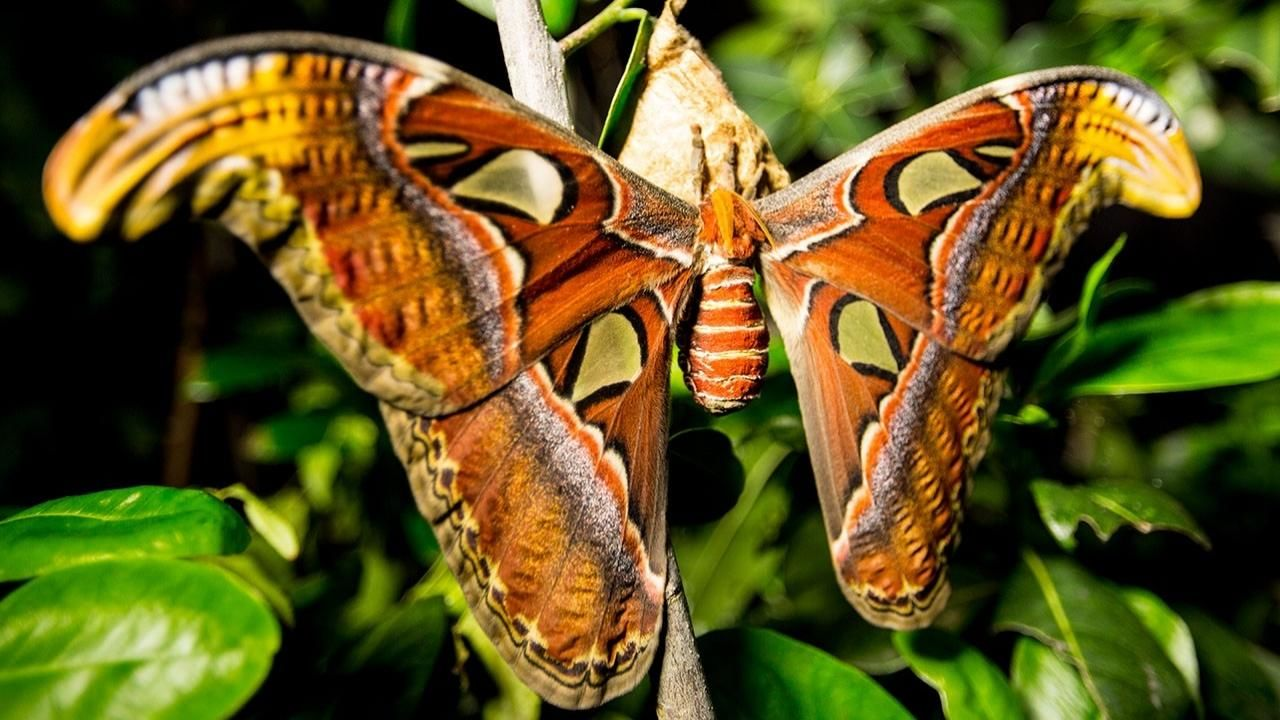 Incredible Insects Photos National Geographic Channel International