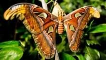 Incredible Insects show