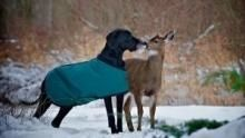 Unlikely Animal Friends Bark-tacular show
