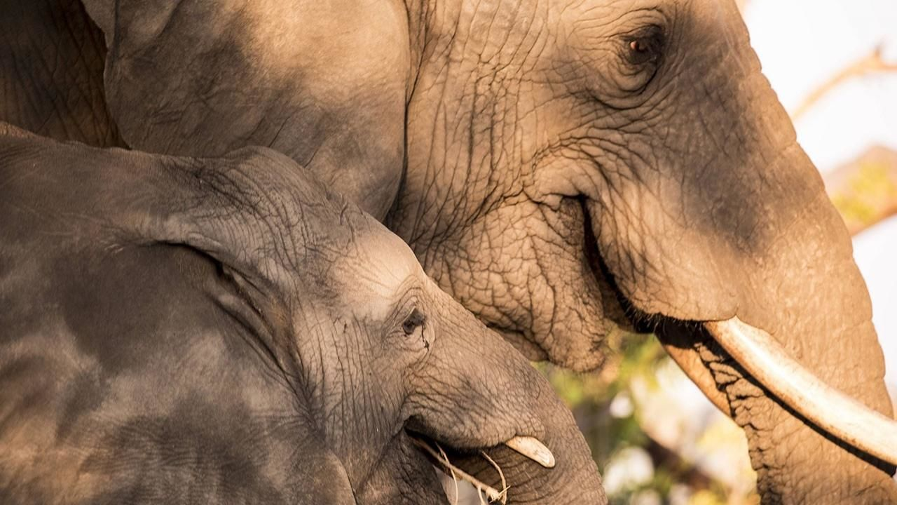 Nude and elephant in africa picture 251