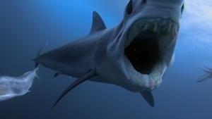 鯊魚大戰掠食動物 節目