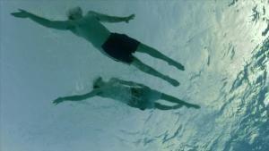 直擊鯊魚攻擊:遊客陷阱 節目