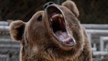 Hollywood's Killer Bear show
