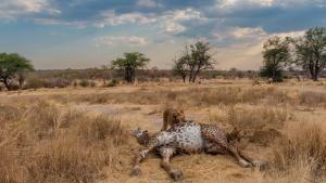 獅子國度:傲與罰 節目