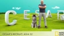 Cesar's Recruit: Asia S2 show