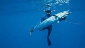 Shark v. Tuna show