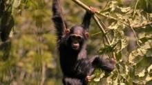 Wild Uganda show