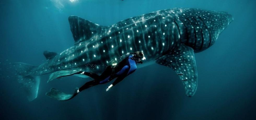 Zeb's Big Fish: Mexico