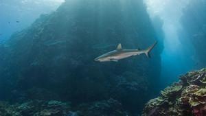 Shark Eden