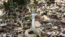 Snake Week show