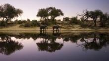 Into the Okavango show