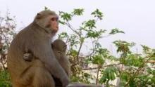 Wild Taiwan: Jungle Island show