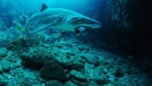 Underwater Oasis
