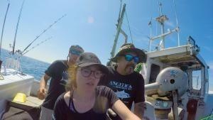 سمكة التونة العنيدة