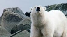 Wild Arctic show