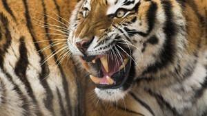 Najopasnije životinje na svetu