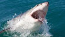 Sharkfest show