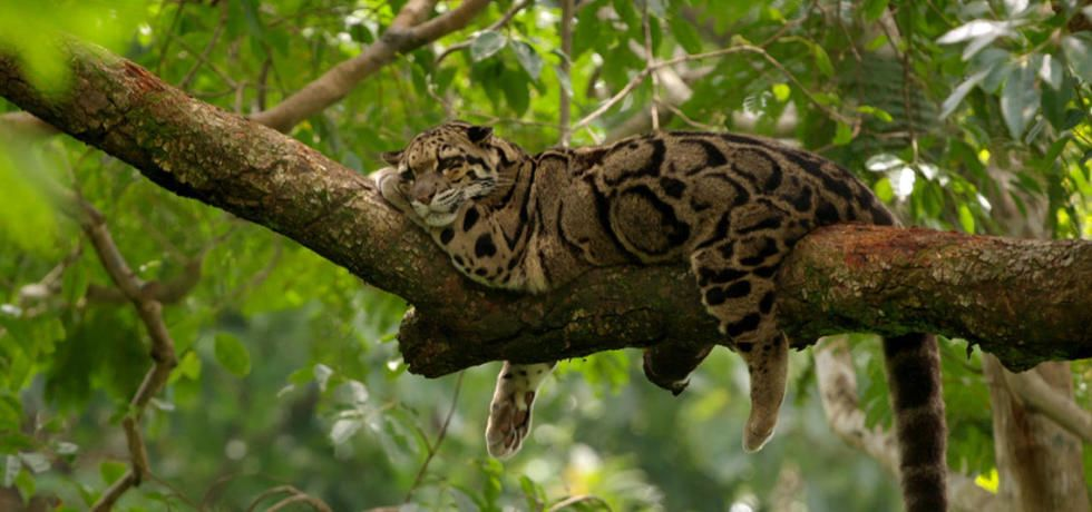 India's Wild Leopards