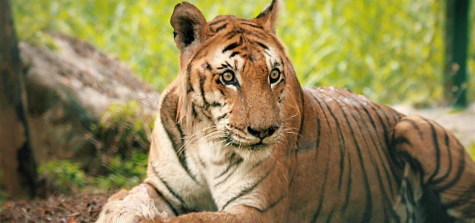 印度森林英雄