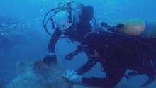 اكتشاف عالم المحيطات برنامج
