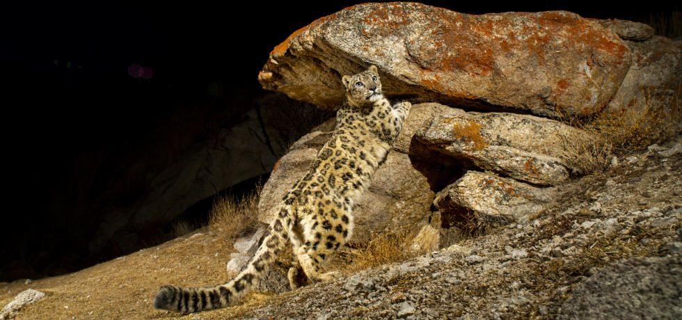 India's Wild Cats