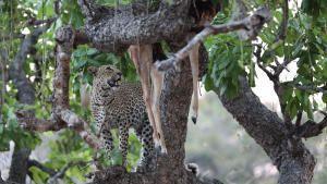 حيوانات أفريقيا المفترسة