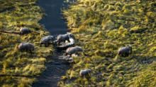 Okavango: River of Dreams show