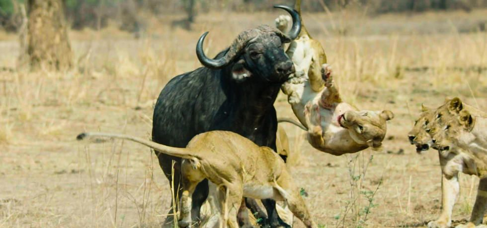Africa's Hunters