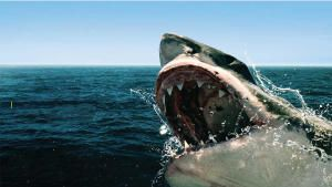 Sharkfest 2020
