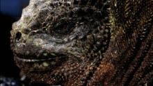 Equator's Wild Secrets show