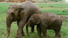 大象守護者 節目