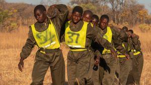 الأكاشينغا: حارسات الحياة البرية