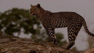 أشرس كائنات أفريقيا