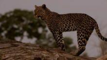 أشرس كائنات أفريقيا برنامج