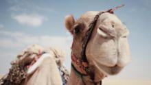 خاص: اليوم الوطني 49 للإمارات العربية المتحدة برنامج
