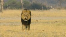 Cecil: The Legacy of a King show