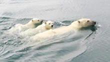 World Polar Bear Day show