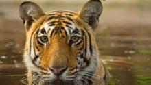 Asia's Wild Secrets  show