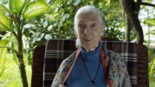 Jane Goodall: saving paradise show