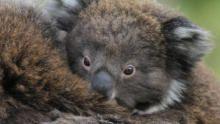 Wild Australia: Will To Survive show