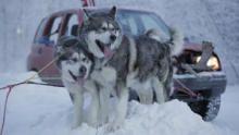 Alaska: the Next Generation show