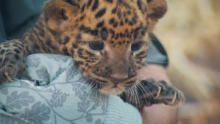 Alaska Animal Rescue: Family Values show