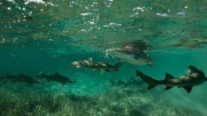 鯊魚幫派 節目