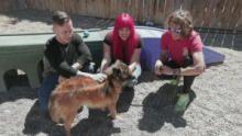 عمليات إنقاذ حيوانات ألاسكا برنامج