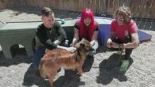 Alaska Animal Rescue show