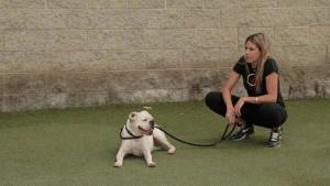 إعادة تأهيل الكلاب