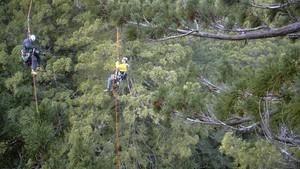 紅杉林大觀 Redwoods: Anatomy Of A Giant