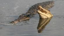 卡圖瑪的鱷魚 Crocs Of Katuma 節目
